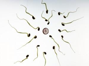 Aşılamada Sperm Kalitesi